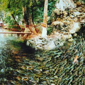 Nam Định - Suối Cá Thần - Sầm Sơn 3 Ngày 2 Đêm